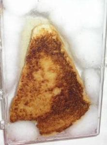 Teleplastia en una tostada incorrupta